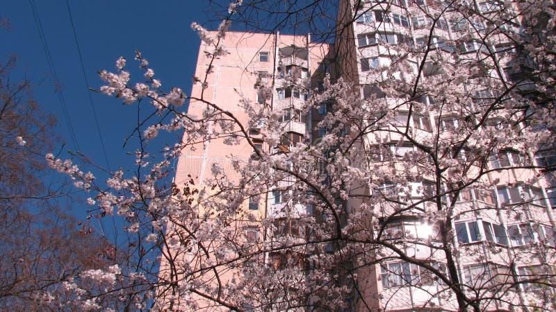 Bâtiment et fleurs soviétiques à la lumière du soleil en Odessa Ukraine image libre de droits