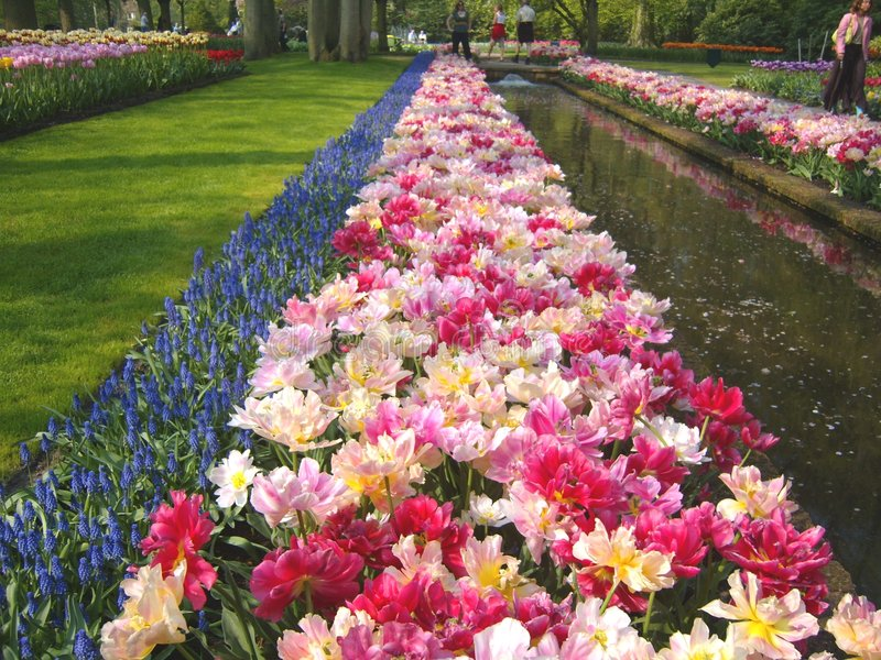 Bâtis et étang de tulipe image stock