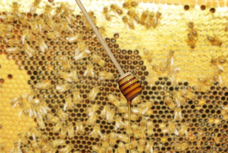 Bâton avec du miel images stock