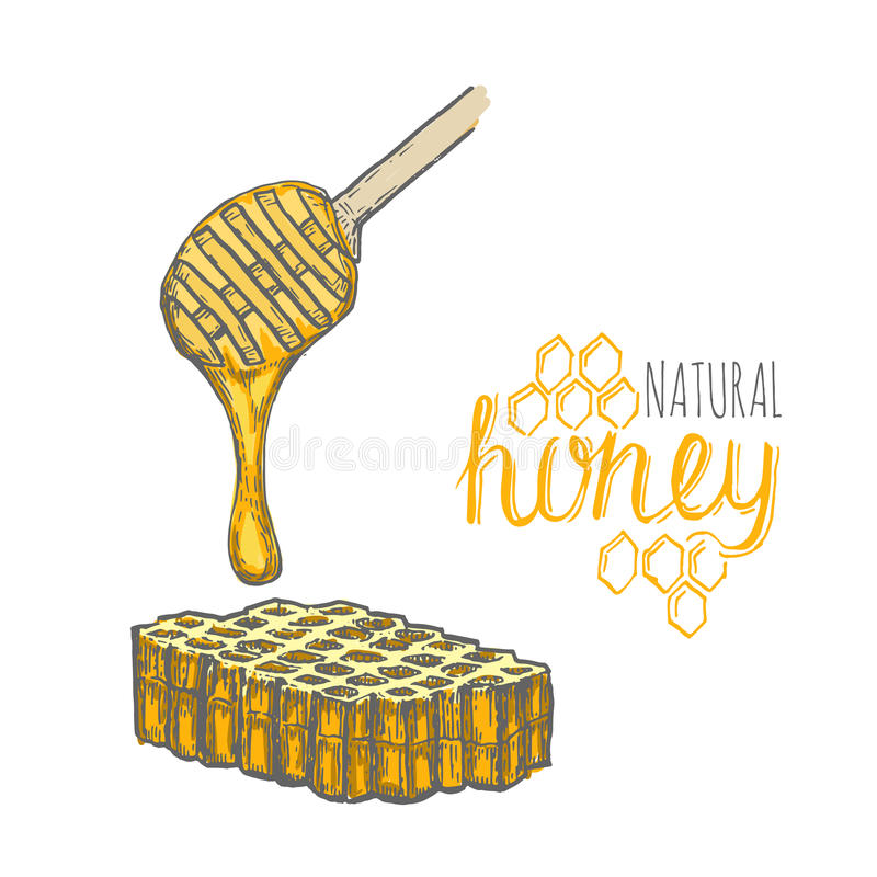 Bâton de miel et peigne tirés par la main de miel au-dessus du fond blanc illustration libre de droits