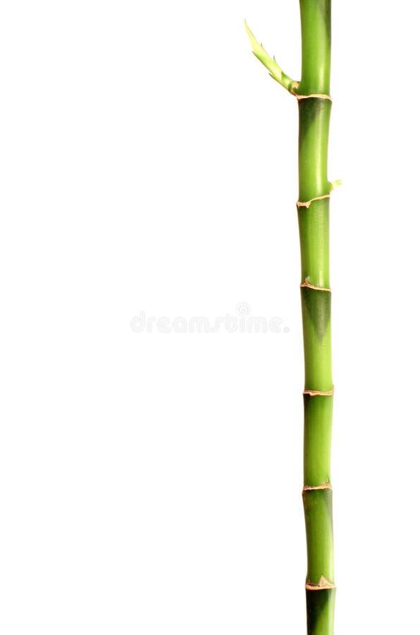 Bâton en bambou photos libres de droits