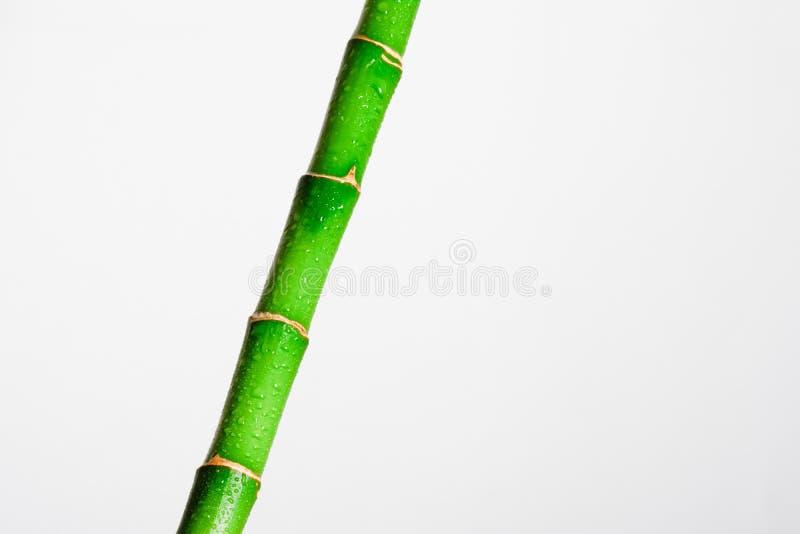 Bâton en bambou photographie stock