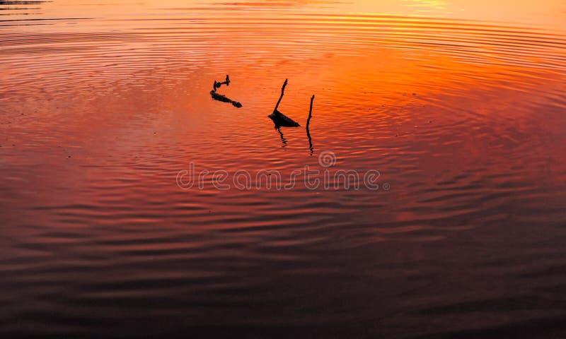 Bâton flottant en bas d'un lac dans le coucher du soleil photos stock