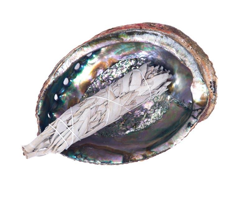 Bâton sage de tache dans la coquille polie lumineuse d'ormeau d'arc-en-ciel photos libres de droits