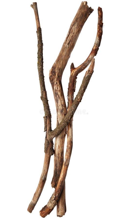 Bâtons d'arbre photographie stock libre de droits