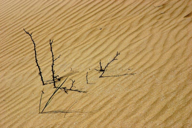 Bâtons dans les dunes photo libre de droits