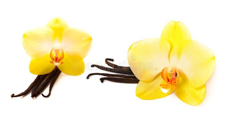 Bâtons de vanille avec la fleur image stock