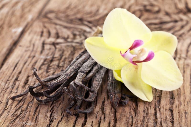 Bâtons de vanille avec une fleur. images stock