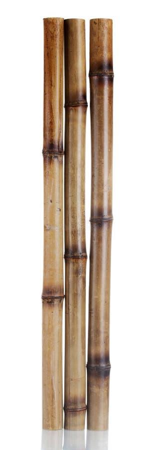 Bâtons en bambou secs image stock