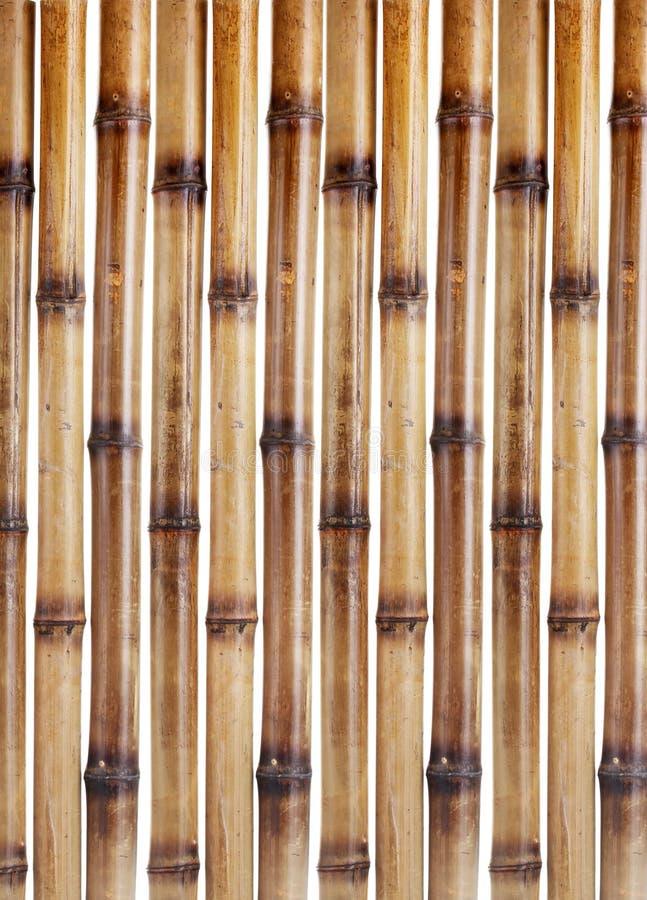 Bâtons en bambou secs images stock