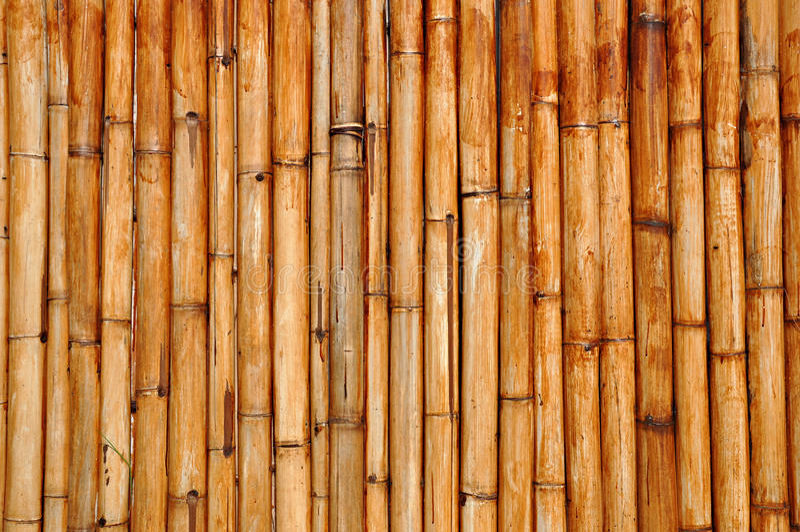 Bâtons en bambou secs photo libre de droits