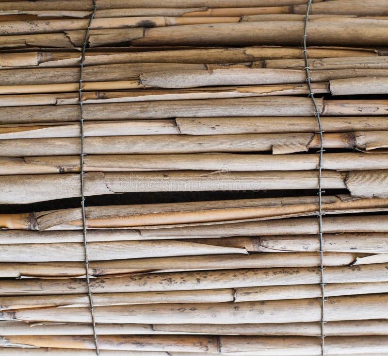 Bâtons en bambou secs, barrière Fond, texture images stock
