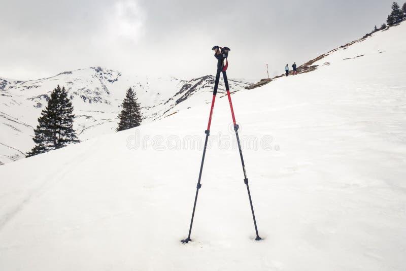 Bâtons s'élevants dans la neige photo stock