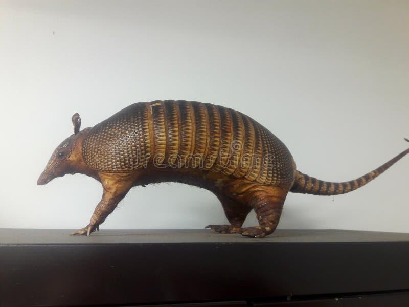Bältdjurbältdjur är placental däggdjur för ny värld in arkivfoto