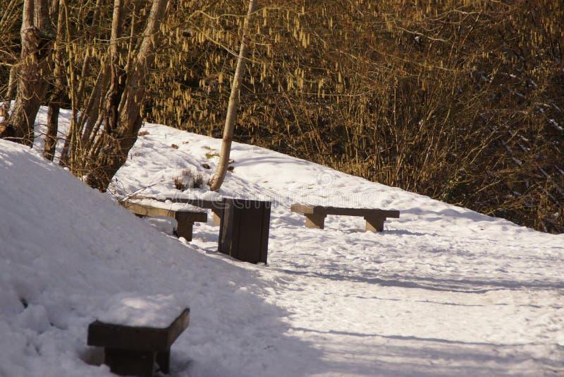 Bänkar i en skog som täckas med snö arkivfoto