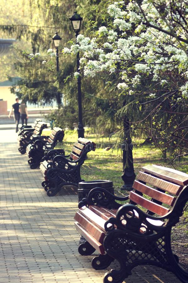 Bänke im Park auf achtem von März-Straße in Jekaterinburg auf einem frühen sonnigen Morgen lizenzfreie stockfotos