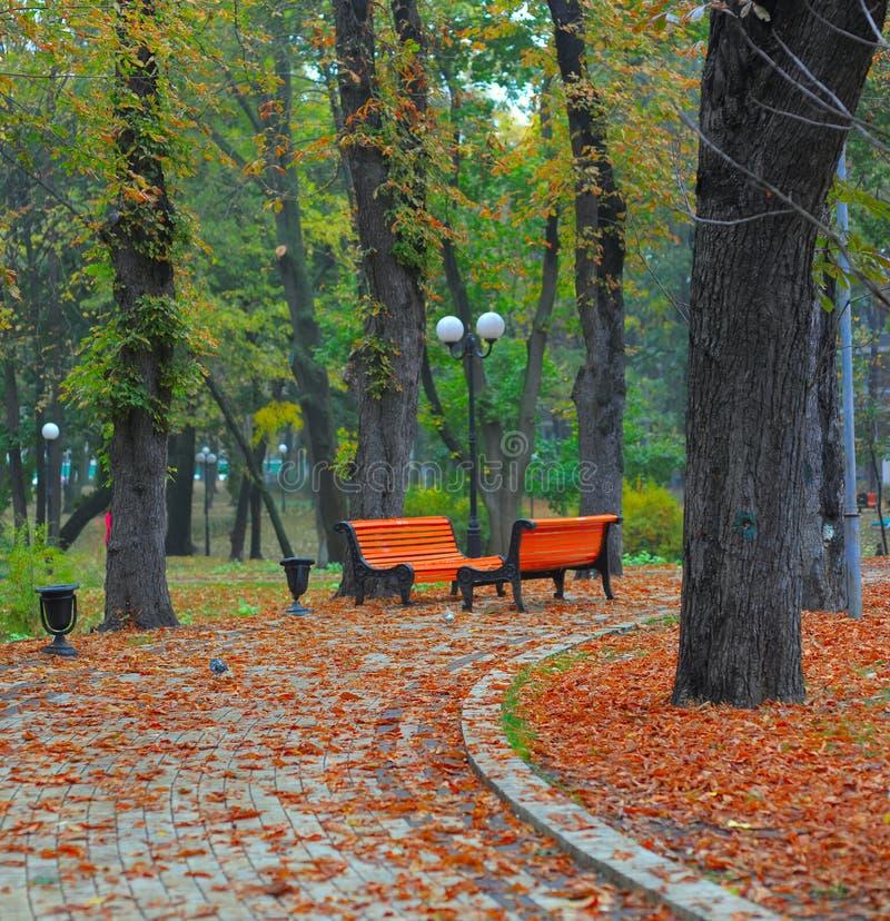 Bänke im Stadtpark stockfotos