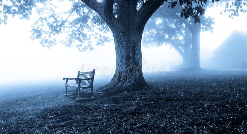 Bänke und Bäume im Nebel, hinter Dickey Ridge Visitor Center stockfoto