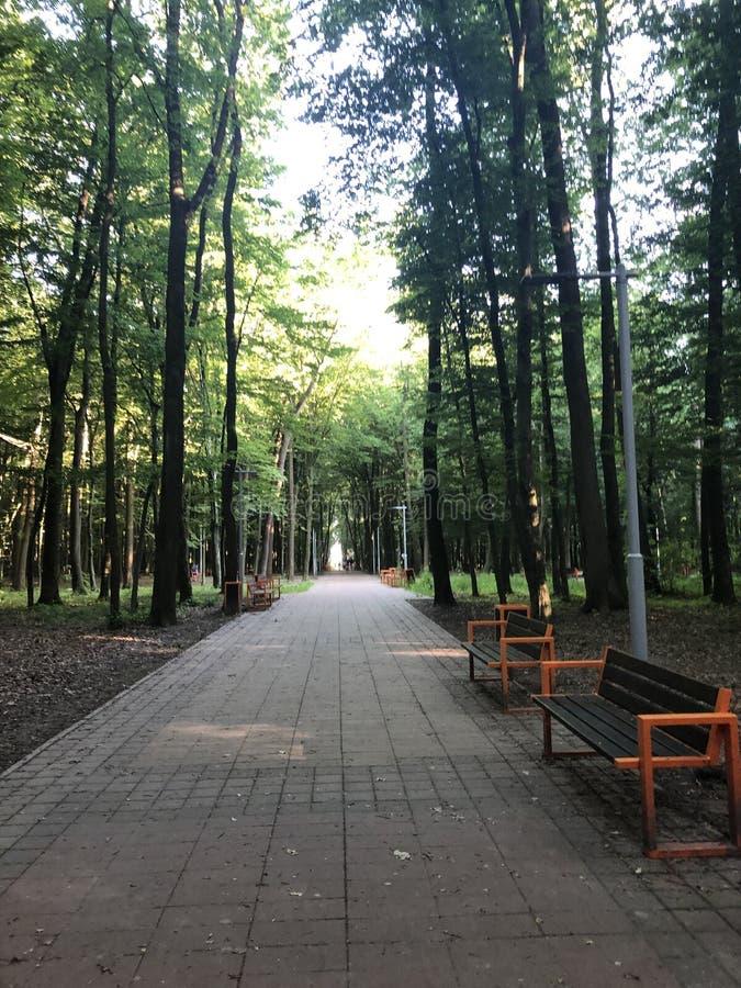 Bänke unter den Bäumen von Stryi-Park in Lemberg stockfoto