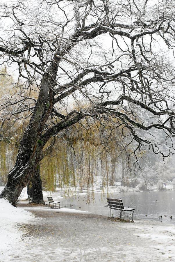 Bänken Räknade Lakesnow Royaltyfri Bild