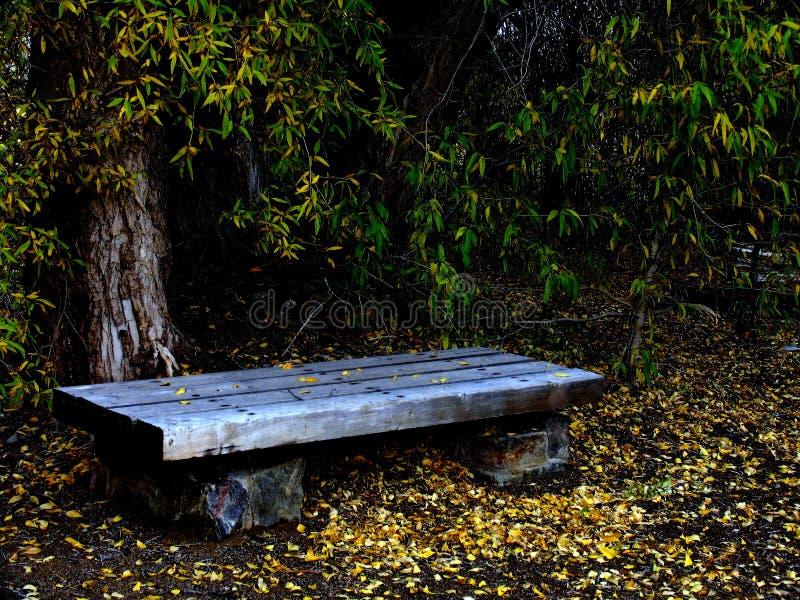 Download Bänkpark arkivfoto. Bild av asphodelen, trees, ändra, parks - 26896