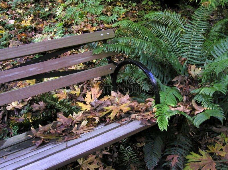 Download Bänkskog arkivfoto. Bild av park, fall, säsong, fern, leaves - 33476