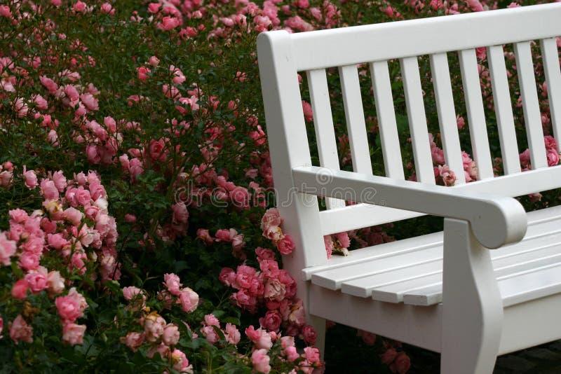 bänkträdgård fotografering för bildbyråer