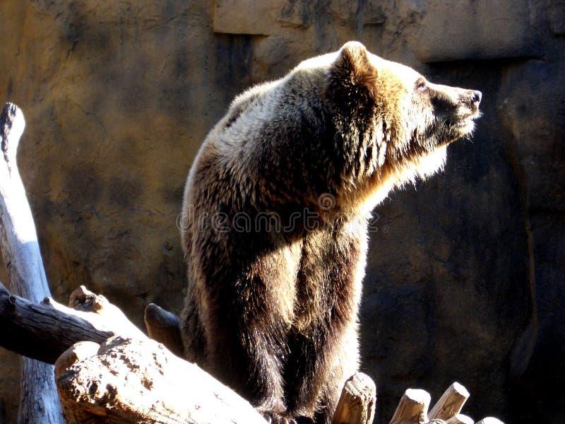 Download Bär stockbild. Bild von braun, bär, leicht, haarig, schwarzes - 43895