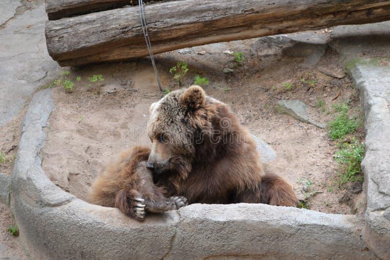 Bär lizenzfreies stockbild