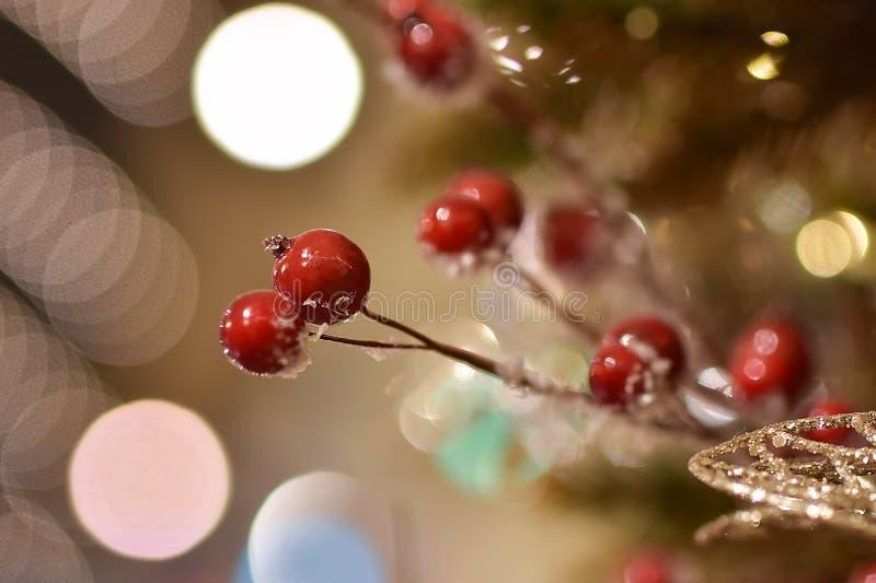 Bär av den röda rimfrost-täckte rönnen arkivfoto