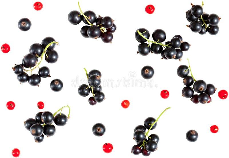Bär av den svarta vinbäret och röda vinbäret som isoleras på vit backg arkivfoton