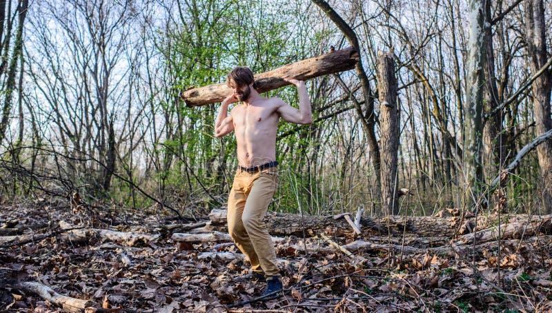 Bär den brutala starka attraktiva grabben för mannen som samlar trä i prydd med pärlor brutal sexig skogsarbetare för skog mannen arkivfoton