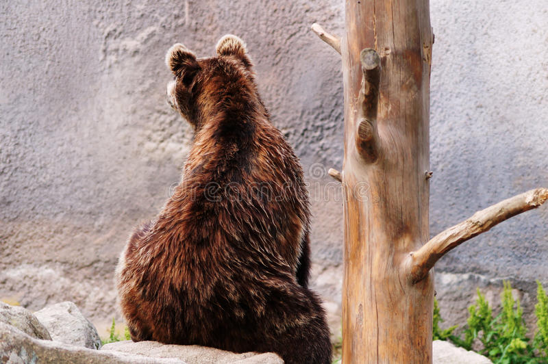 Bär in einem Zoo lizenzfreies stockbild