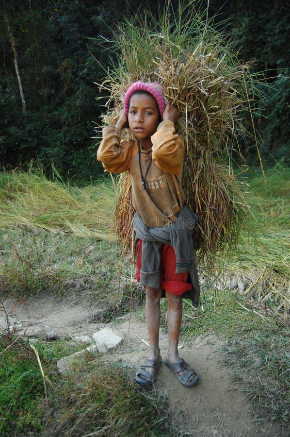 Bärande fodder för nepalesisk pojke för lantgårddjur royaltyfri fotografi