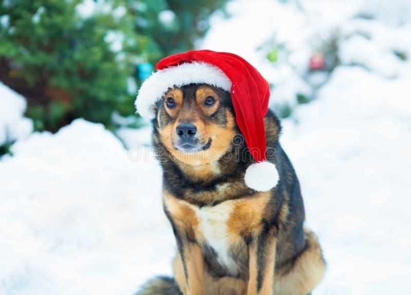 Bärande jultomten för hund hatt arkivbild