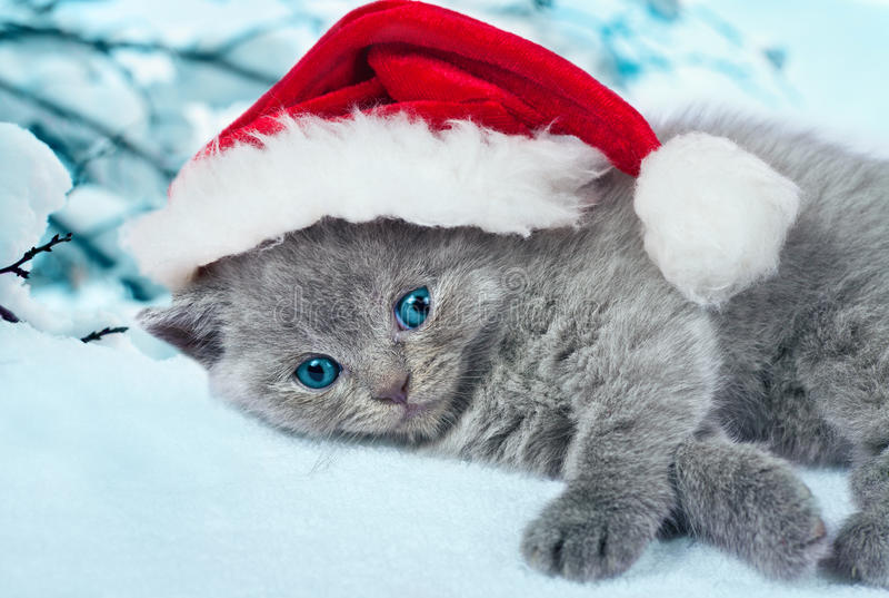 Bärande jultomten för kattunge hatt fotografering för bildbyråer