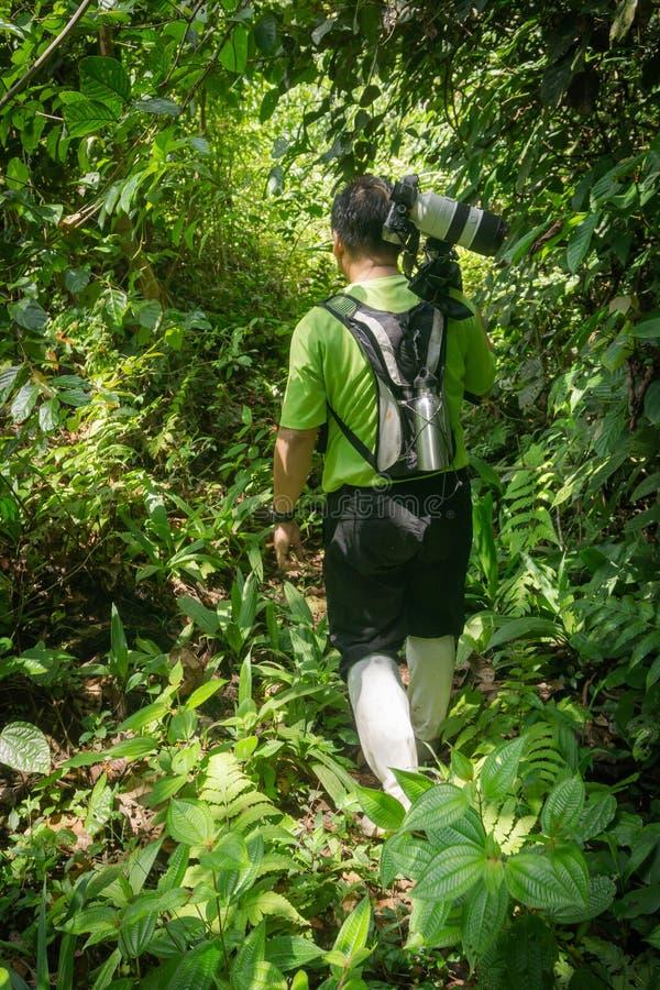 Bärande kamera för handbok och för assistent till och med tät rainforest av Borneo royaltyfria foton