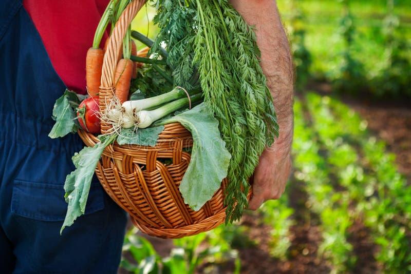 Bärande korg för bonde med grönsaker arkivbilder