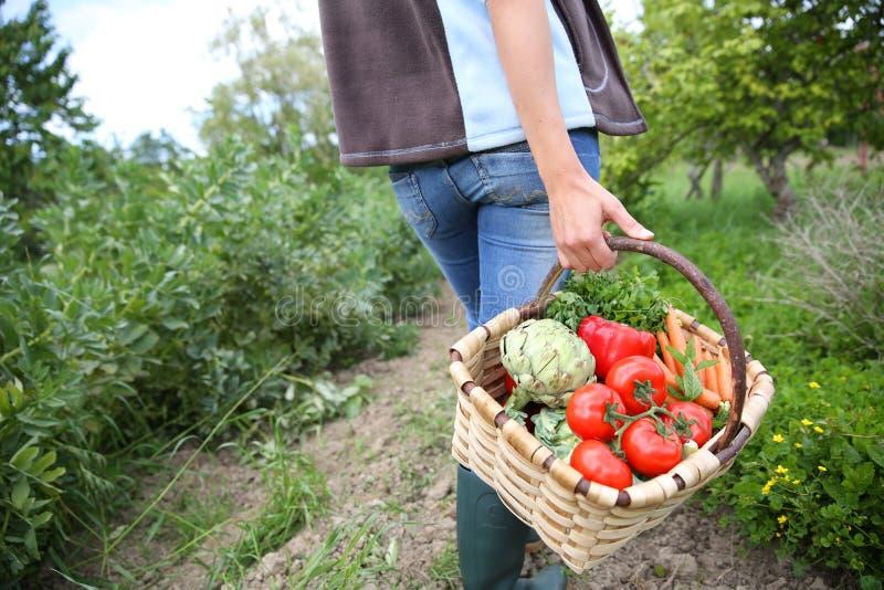 Bärande korg för kvinna mycket av nytt samlade grönsaker royaltyfri foto