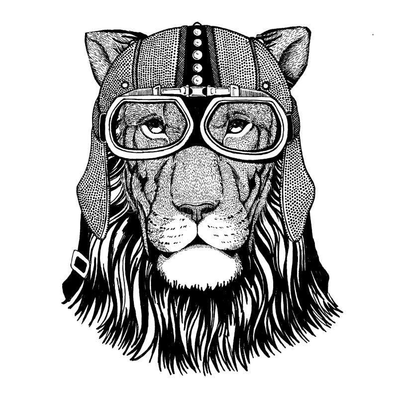 Bärande motorcykel för lejon, aero hjälm Cyklistillustration för t-skjortan, affischer, tryck vektor illustrationer