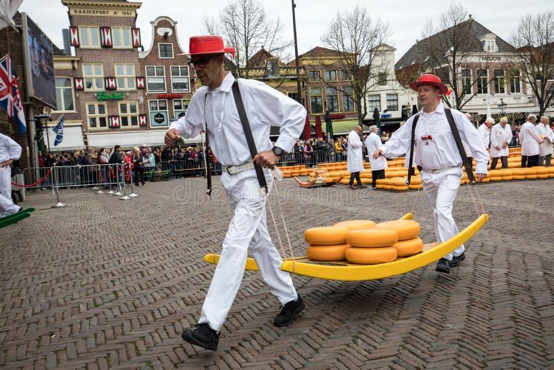 Bärare som går med många ostar i den berömda holländska osten, marknadsför i Alkmaar, royaltyfri bild