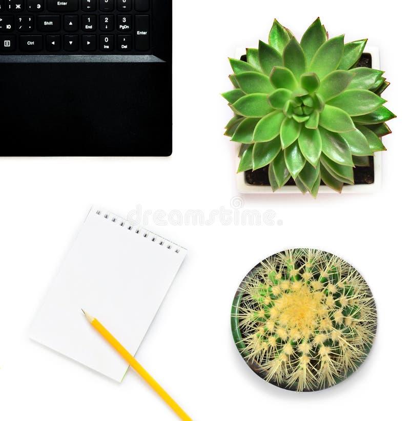 Bärbar dator, blomma och kaktus i blomkruka på vit bakgrund royaltyfria foton