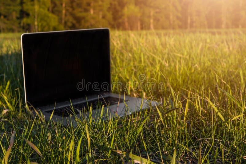 Bärbar dator som ligger i gräset på en solig sommar royaltyfria bilder