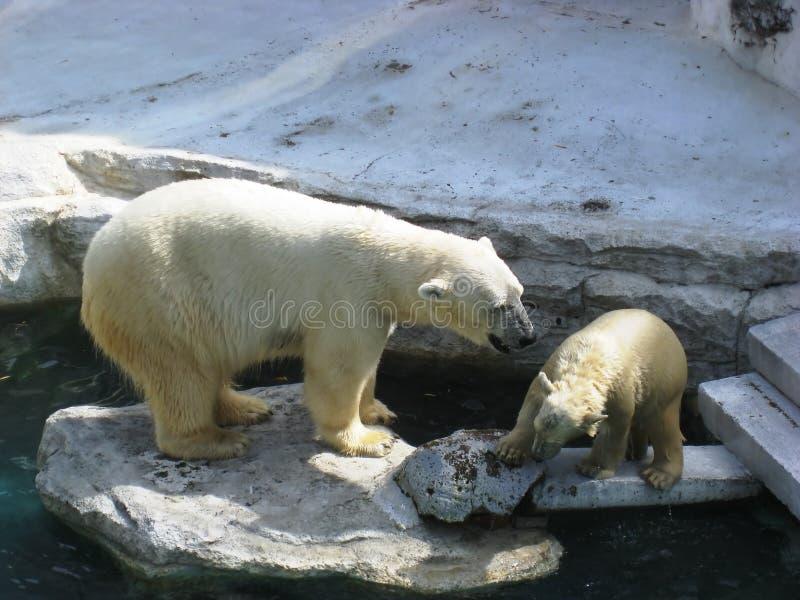 Bären stockfoto