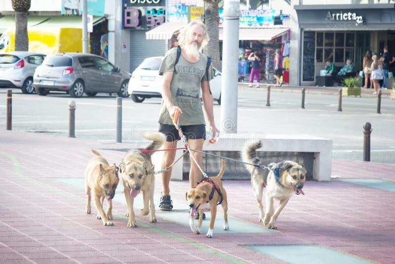 Bärenhaariger Leder führt vier Hunde lizenzfreie stockfotografie