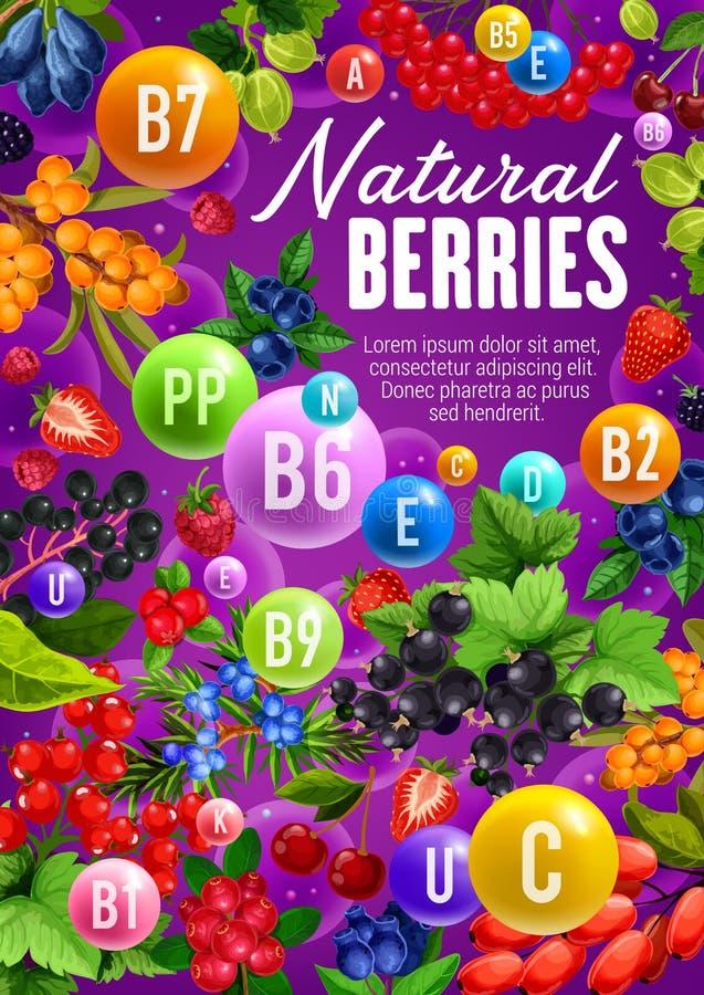 Bärfrukter, organiska vitaminer i naturlig mat vektor illustrationer