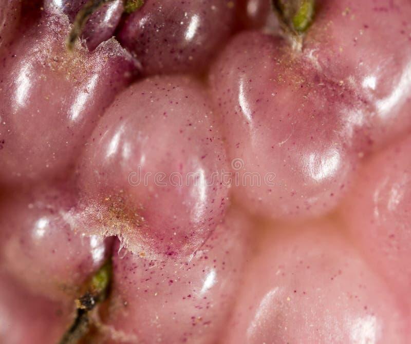 Bärmullbärsträdträd som en bakgrund Makro royaltyfria bilder