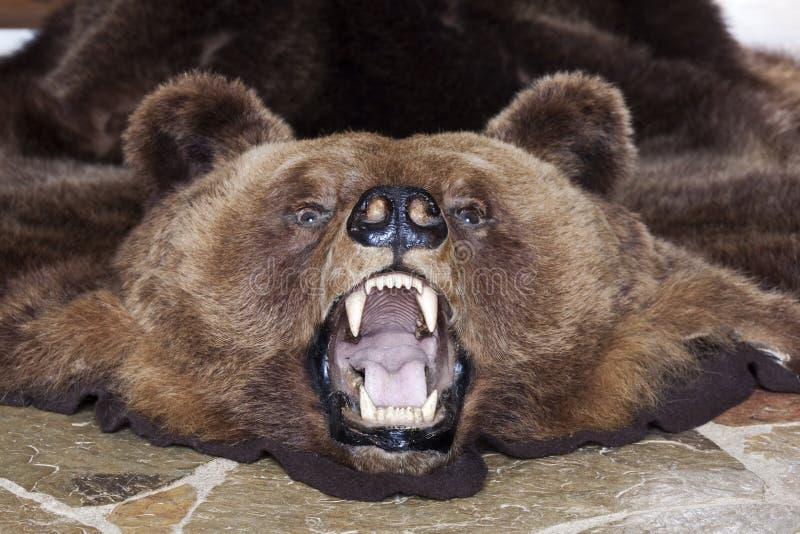 Bärnkopf lizenzfreie stockfotos