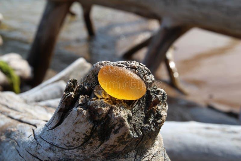 Bärnsten på en strand av Östersjön Baltiska bärnstensfärgade smycken lantligt trä för bakgrund arkivbild