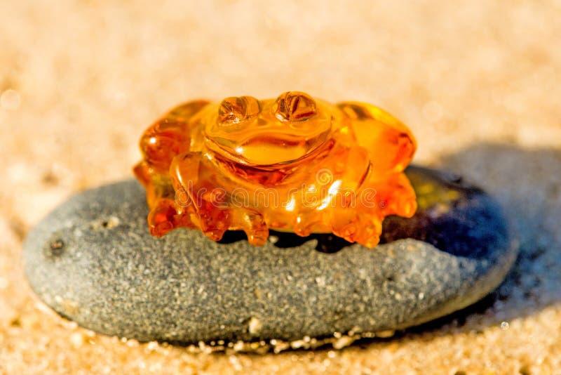 Bärnstensfärgad groda på en strand arkivbilder